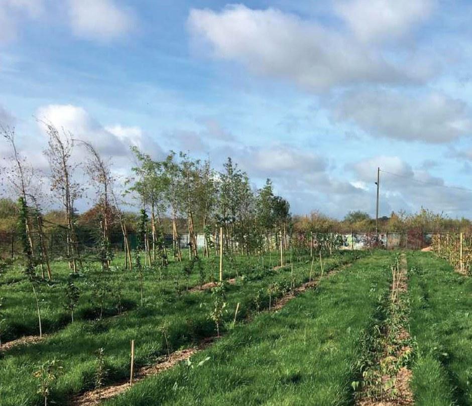 Orléans : le futur écoquartier des Groues s'écrit à partir de la pépinière